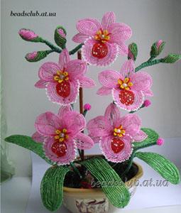Орхидея Мильтония, бисер.